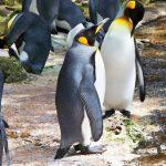 コウテイペンギンの父親にできて、俺たち人間の父親にできないはずがない!
